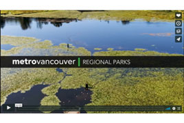 http://www.metrovancouver.org/about/departments/DepartmentNewsImages/RegionalParksService.jpg, Regional Parks protect Metro Vancouver's natural areas and help residents enjoy and connect with nature.