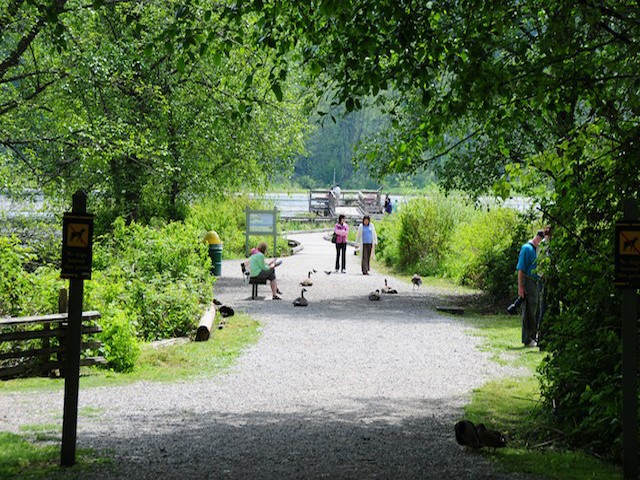 Piper Spit is a popular place for a gentle walk and to view wildlife around Burnaby Lake