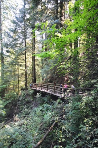 The Capilano Pacific Trail takes hikers from Cleveland Dam to the mouth of the Capilano River at Park Royal.