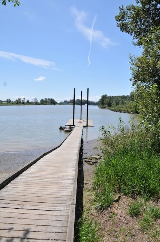 The floating dock at Deas Island Regional Park can be used to launch canoes, kayaks, rowboats or other non-motorized craft.