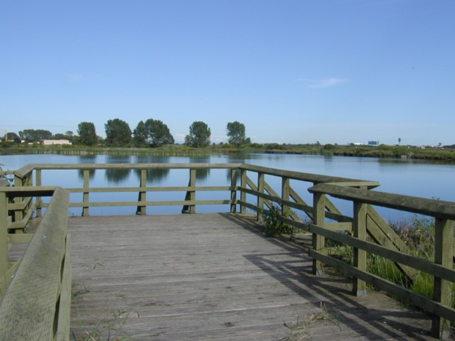 Viewing platform overlooking pond at Iona Beach Regional Park