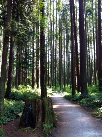 A walk along Pacific Spirit's forested trails can make the city and all its worries seem very far away.